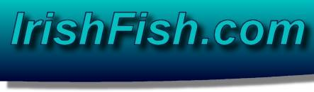 Irish Fish.com - Fish, recipes, Fishing and Boats in Ireland